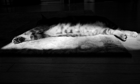 Pearl Napping in The Light 063 (1024x614) (2)